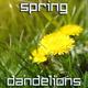 Spring Dandelions - VideoHive Item for Sale