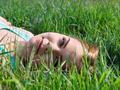 Young sensual smiling blonde lying on the grass in the sunlight - PhotoDune Item for Sale