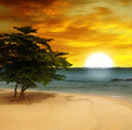 sea beach, a tree and a fantastic sunset - PhotoDune Item for Sale