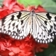 Butterfly On The Red Flower  - VideoHive Item for Sale
