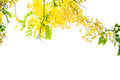 yellow flower on isolate white background - PhotoDune Item for Sale