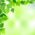 Spring leaves - PhotoDune Item for Sale