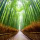 Path to bamboo forest, Arashiyama, Kyoto, Japan - PhotoDune Item for Sale