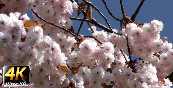 Flowers on Tree 2