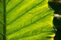 Streaks of green leaf - PhotoDune Item for Sale