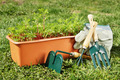 Box with seedling and gardening tools stand on green grass - PhotoDune Item for Sale