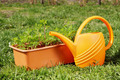 Box with seedling and watering can stand on green grass in the garden - PhotoDune Item for Sale