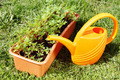 Box with seedling and watering can stand on green grass - PhotoDune Item for Sale