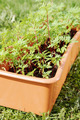 Box with seedling stands on green grass in the garden - PhotoDune Item for Sale