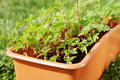 Box with seedling stands on green grass - PhotoDune Item for Sale