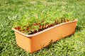 Box with young seedling stands on green grass in the garden - PhotoDune Item for Sale