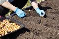 Gardener planting onions in the kitchen garden - PhotoDune Item for Sale