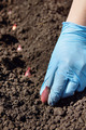 Gardener planting onions on a bed - PhotoDune Item for Sale