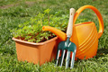 Gardening tools with watering can and a box of seedling in the garden - PhotoDune Item for Sale