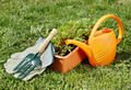 Watering can with gardening tools on green grass in the garden - PhotoDune Item for Sale