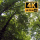 Panorama In The Forest - VideoHive Item for Sale