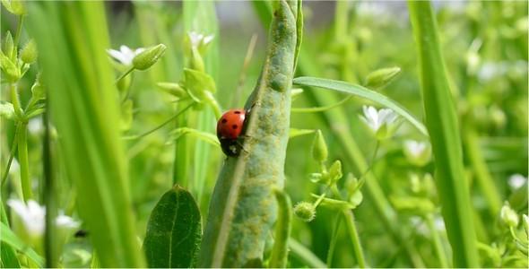 Ladybug 3