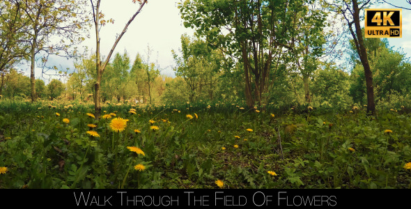 VideoHive Walk Through The Field Of Flowers 11416952