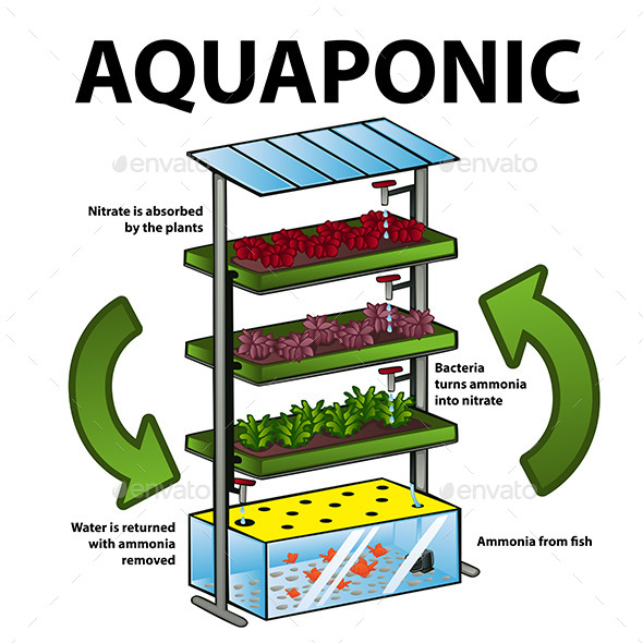 GraphicRiver Aquaponic System 11418886