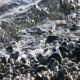 Foamy Wave on Pebble Beach 2 - VideoHive Item for Sale