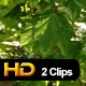 Green Leaves in Wind - VideoHive Item for Sale