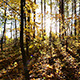 Beautiful Autumn Forest With Sun Shining - VideoHive Item for Sale