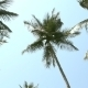 Coconut Palm Trees And Sky - VideoHive Item for Sale
