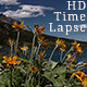 Bright Orange Flowers Clouds Lake Blue Sky - VideoHive Item for Sale
