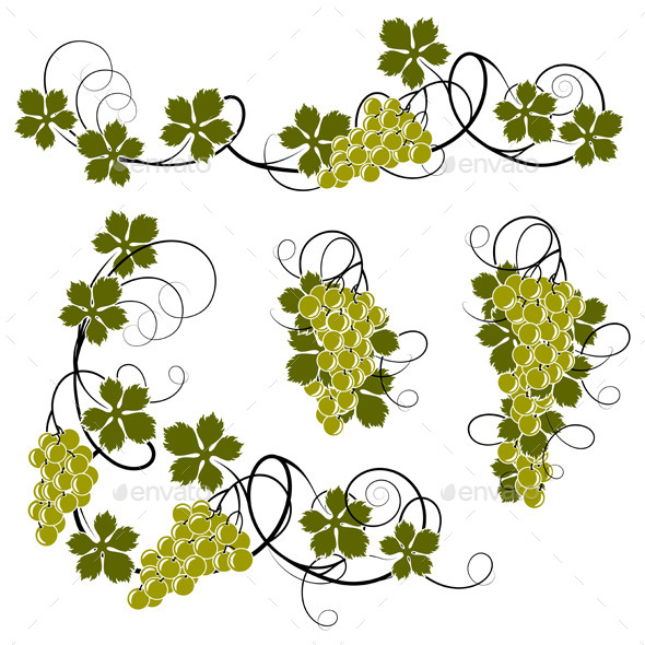 GraphicRiver Grape Vines 11448184