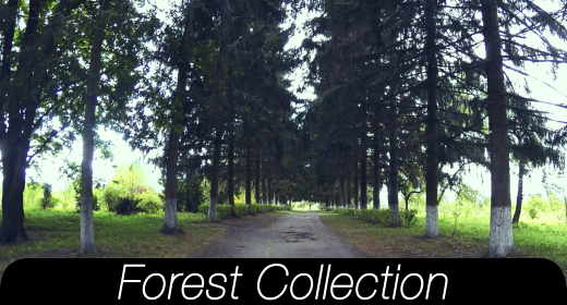 Forest Collections