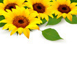 Sunflowers Background With Sunflower And Leaves. - PhotoDune Item for Sale