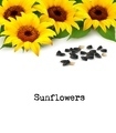 Sunflowers background with sunflower seeds.  - PhotoDune Item for Sale