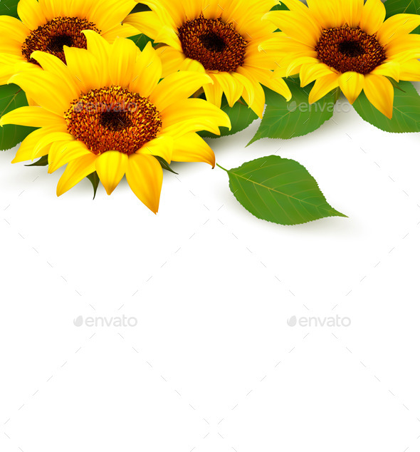 GraphicRiver Sunflowers Background With Sunflower And Leaves 11450667