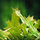 Spiky Plant In Rain Closeup - VideoHive Item for Sale