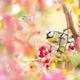 Blue tit bird in flowering apple tree - PhotoDune Item for Sale