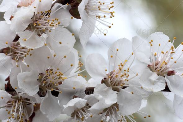 Blossoming - Stock Photo - Images