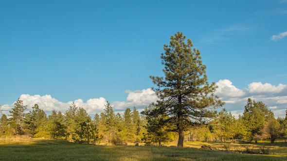VideoHive Lone Tree 11456371