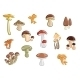 Collection Of Cartoon Mushrooms And Fungus - GraphicRiver Item for Sale