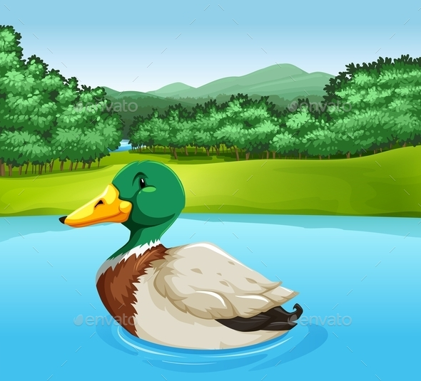 GraphicRiver A Duck 11456982