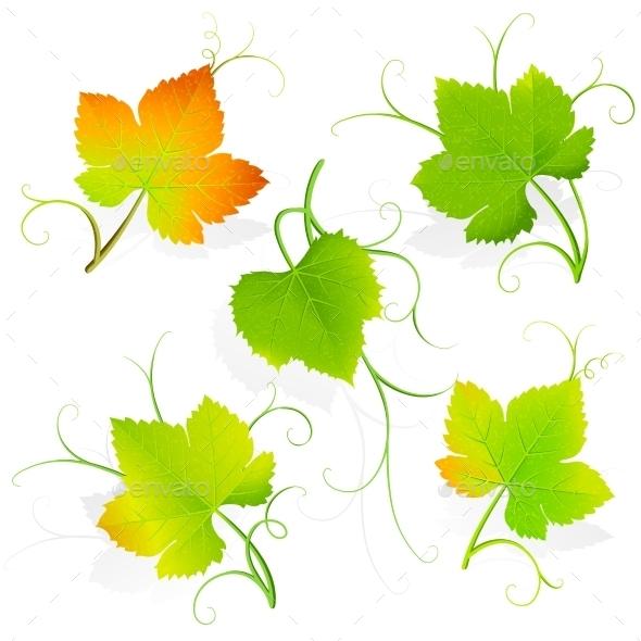 GraphicRiver Grape Leaves Vector 11457690