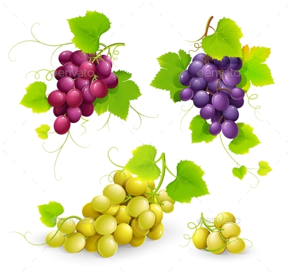 GraphicRiver Bunches Of Grapes 11457740