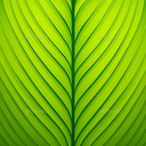 GraphicRiver Texture Green Leaf 11458043