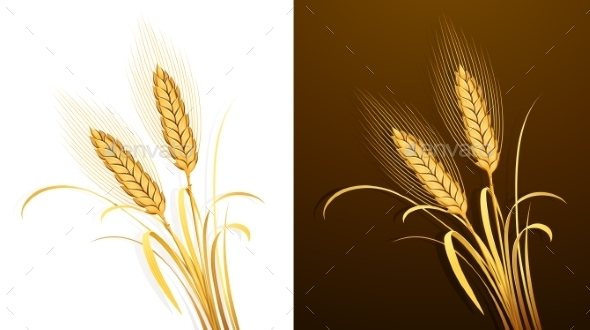GraphicRiver Wheat Ears 11458095