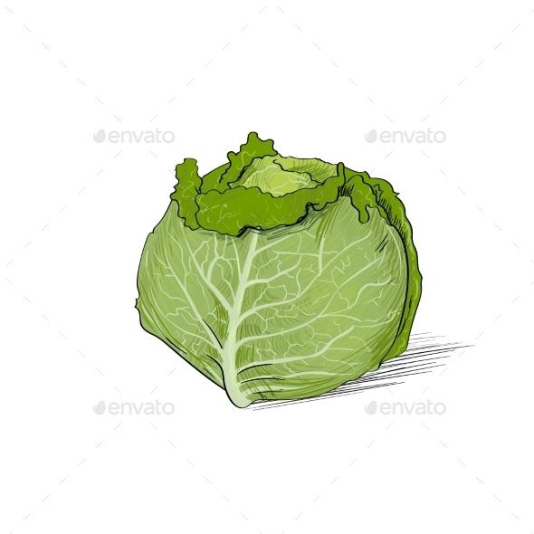 GraphicRiver Cabbage Green Color Sketch 11459693
