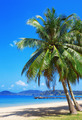 Coconut palm on a tropical beach - PhotoDune Item for Sale