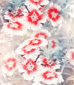 Carnation Flowers Background - PhotoDune Item for Sale