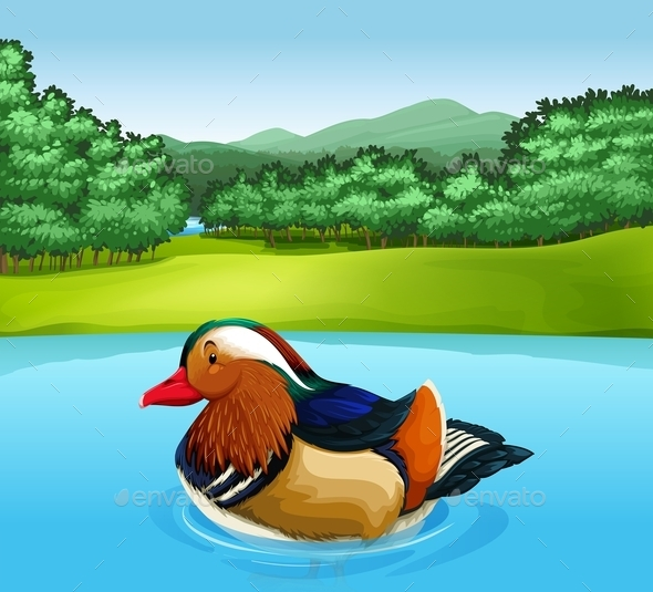 GraphicRiver Mandarin Duck 11466780