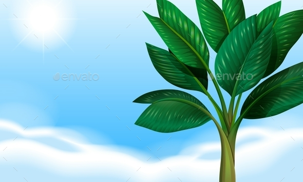 GraphicRiver A Clear Blue Sky and the Green Leaves 11468159