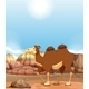 Camel - GraphicRiver Item for Sale