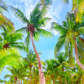 Fresh green palm trees background - PhotoDune Item for Sale